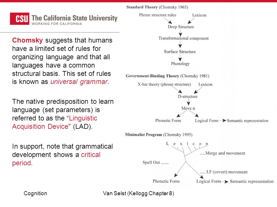 CognitionVan Selst (Kellogg Chapter 8) Chomsky suggests that humans have a limited set of rules for organizing language and that all languages have a common structural basis.