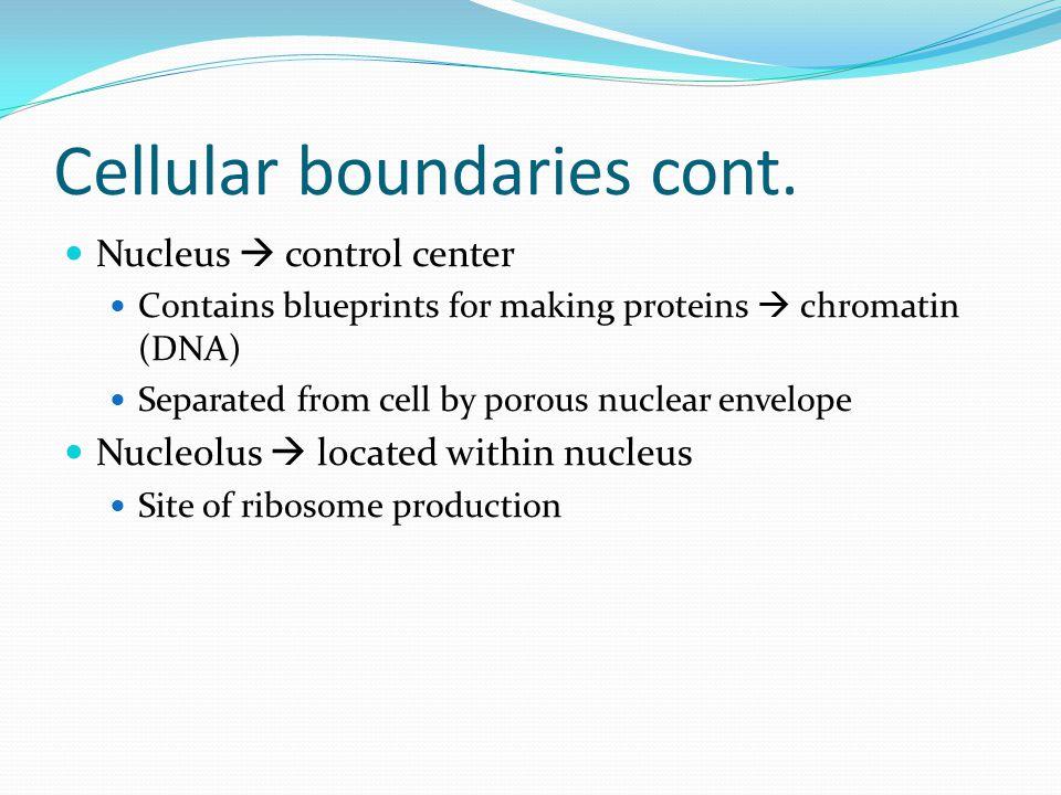 Cellular boundaries cont.