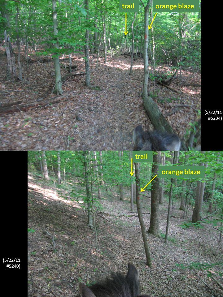 (5/22/11 #5227) trail orange blaze (5/22/11 #5226)