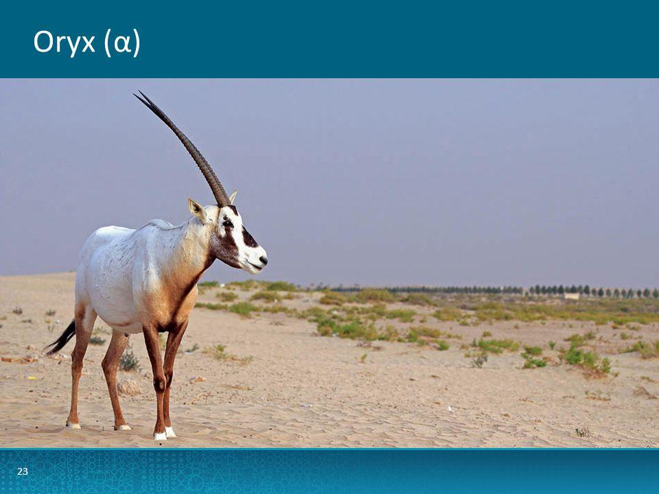 Oryx (α) 23