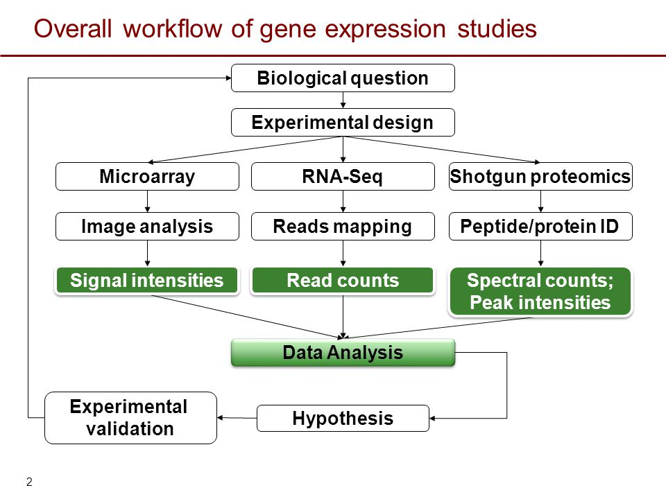 Summary Three major goals of gene expression studies  Differential expression (supervised analysis)  Clustering (unsupervised analysis)  Classification (machine learning) Gene expression data pre-processing steps  Missing data imputation  Normalization  Transformation Differential expression analysis  Student's t-test  Multiple-test adjustment Control the family-wise error rate (FWER) Control the false discovery rate (FDR) 23 Agglomerative hierarchical clustering  Bottom-up  Between objects distance measurement Euclidean distance Pearson's correlation coefficient Spearman's correlation coefficient  Between cluster distance measurement Single linkage Complete linkage Average linkage  Visualization Dendrogram Heat map