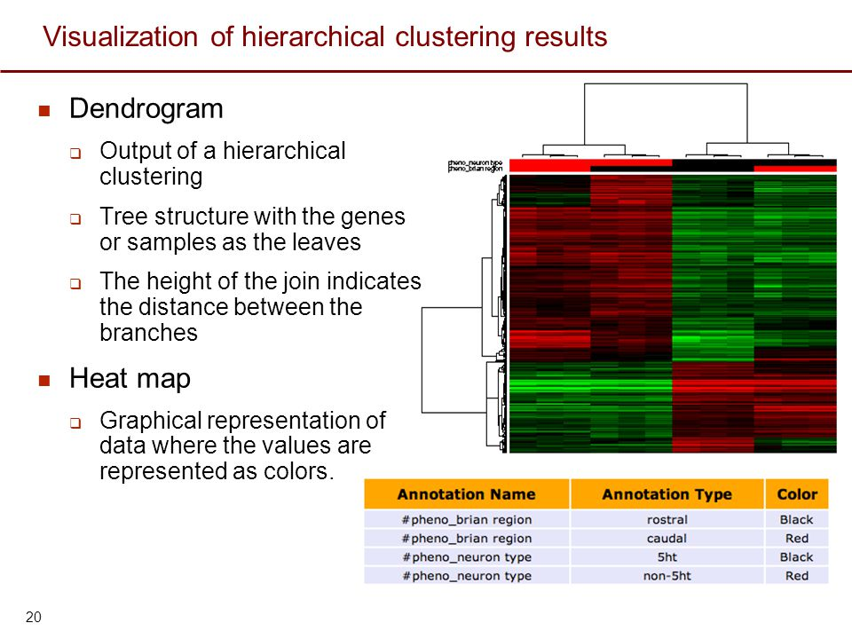 Visualization of hierarchical clustering results Dendrogram  Output of a hierarchical clustering  Tree structure with the genes or samples as the le