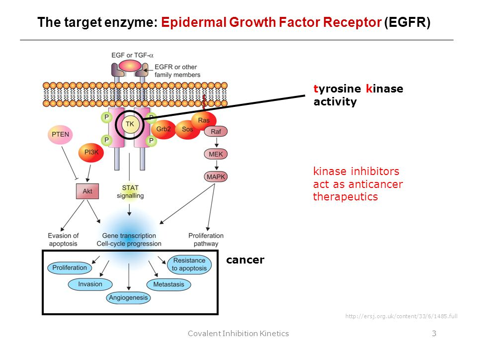 Covalent Inhibition Kinetics3 The target enzyme: Epidermal Growth Factor Receptor (EGFR) http://ersj.org.uk/content/33/6/1485.full tyrosine kinase act