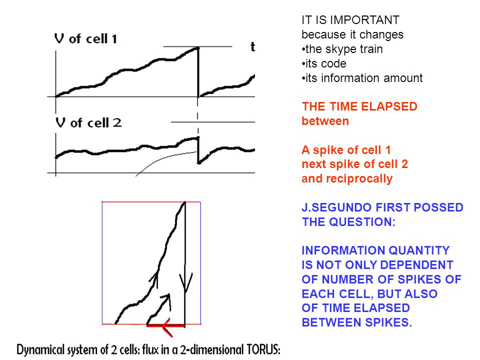 IT IS IMPORTANT because it changes the skype train its code its information amount THE TIME ELAPSED between A spike of cell 1 next spike of cell 2 and reciprocally J.SEGUNDO FIRST POSSED THE QUESTION: INFORMATION QUANTITY IS NOT ONLY DEPENDENT OF NUMBER OF SPIKES OF EACH CELL, BUT ALSO OF TIME ELAPSED BETWEEN SPIKES.