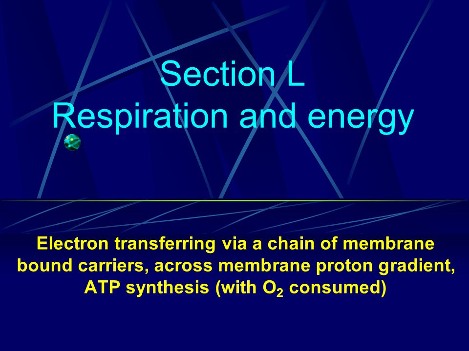 Section L Respiration and energy Electron transferring via a chain of membrane bound carriers, across membrane proton gradient, ATP synthesis (with O 2 consumed)
