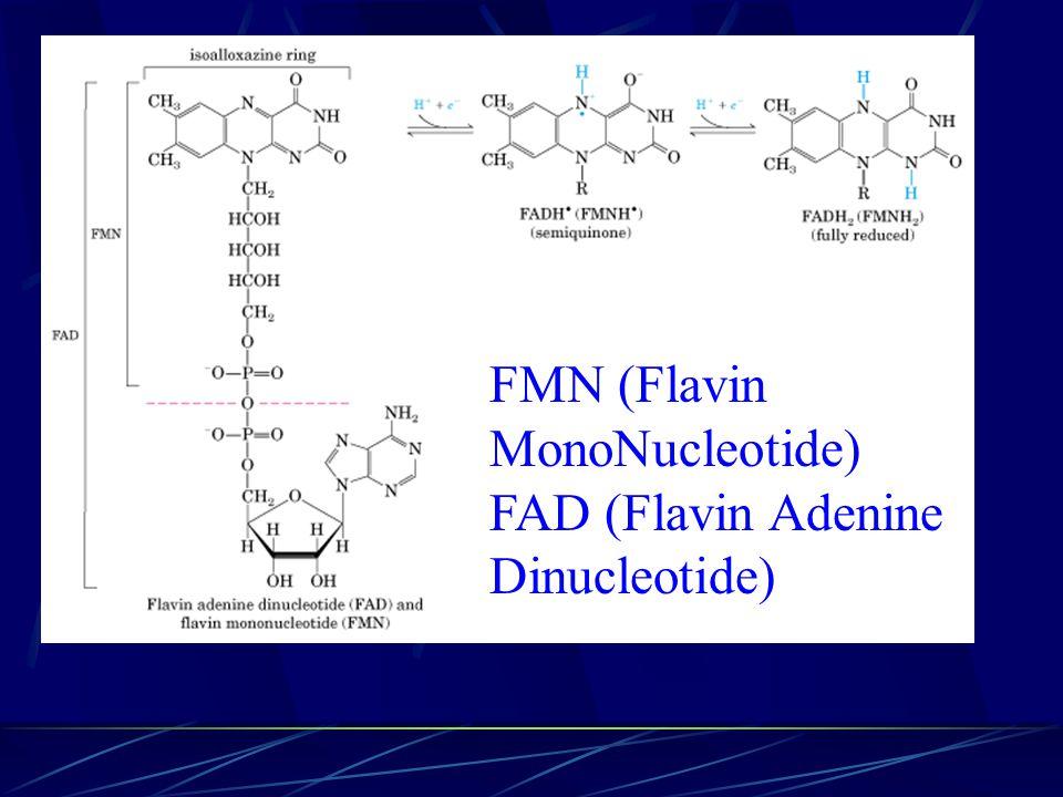 FMN (Flavin MonoNucleotide) FAD (Flavin Adenine Dinucleotide)