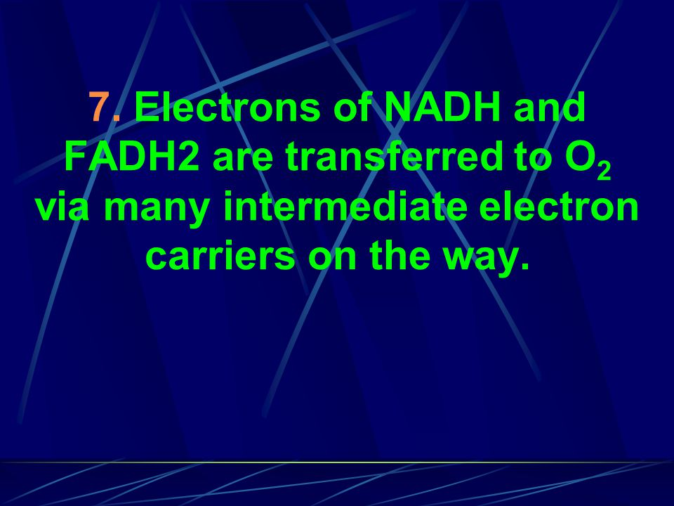 7. Electrons of NADH and FADH2 are transferred to O 2 via many intermediate electron carriers on the way.