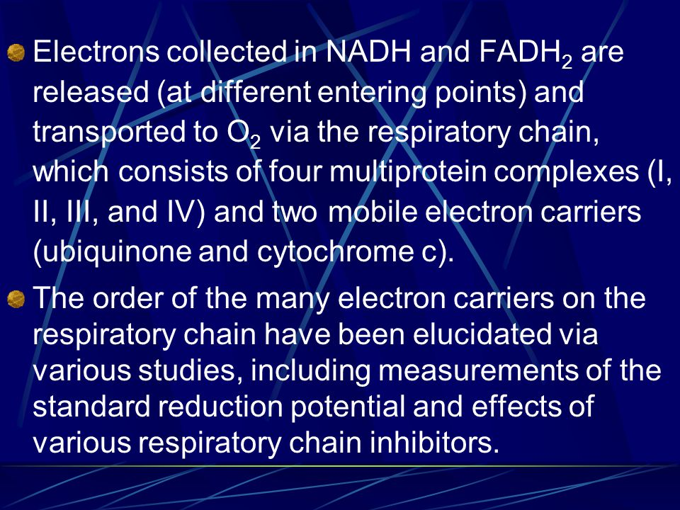 Electrons collected in NADH and FADH 2 are released (at different entering points) and transported to O 2 via the respiratory chain, which consists of four multiprotein complexes (I, II, III, and IV) and two mobile electron carriers (ubiquinone and cytochrome c).