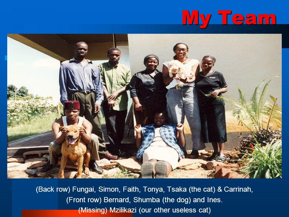 My Team (Back row) Fungai, Simon, Faith, Tonya, Tsaka (the cat) & Carrinah, (Front row) Bernard, Shumba (the dog) and Ines.