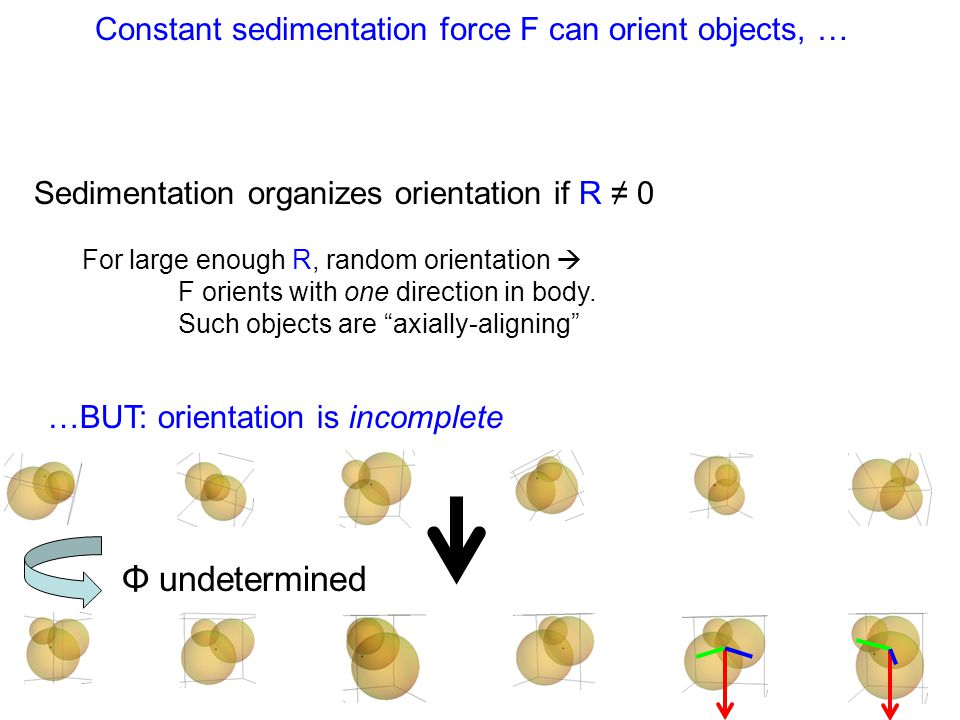 Constant sedimentation force F can orient objects, … Sedimentation organizes orientation if R ≠ 0 For large enough R, random orientation  F orients with one direction in body.