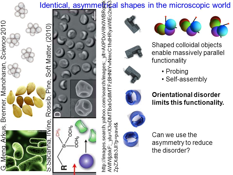 Identical, asymmetrical shapes in the microscopic world G.