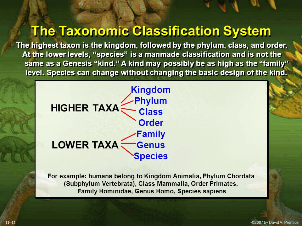  2007 by David A. Prentice The Taxonomic Classification System The highest taxon is the kingdom, followed by the phylum, class, and order. At the lo