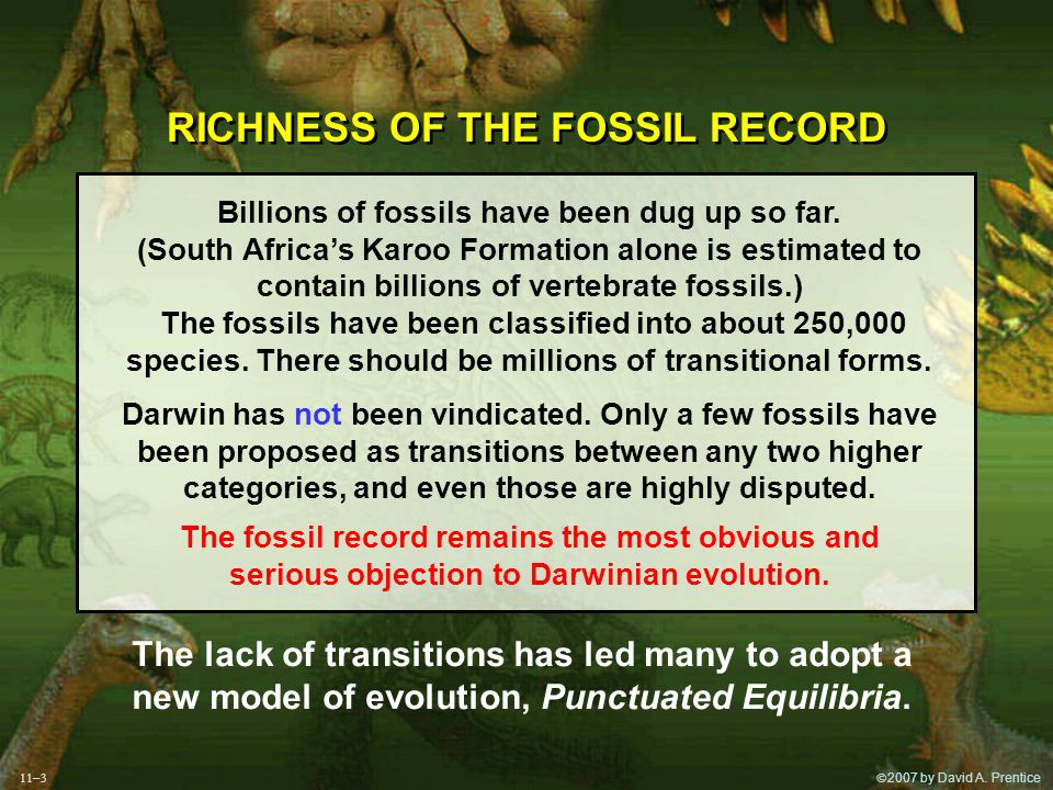  2007 by David A. Prentice RICHNESS OF THE FOSSIL RECORD Billions of fossils have been dug up so far. (South Africa's Karoo Formation alone is estim