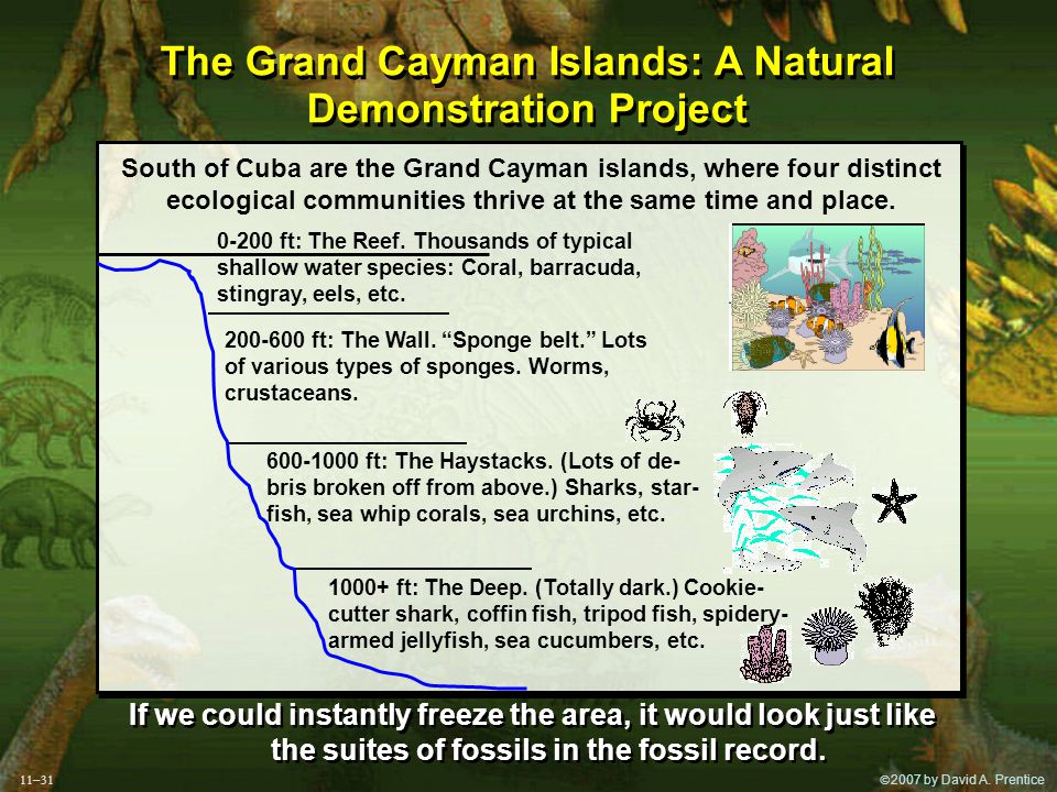  2007 by David A. Prentice South of Cuba are the Grand Cayman islands, where four distinct ecological communities thrive at the same time and place.