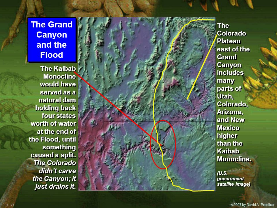  2007 by David A. Prentice The Grand Canyon and the Flood The Grand Canyon and the Flood The Kaibab Monocline would have served as a natural dam hol