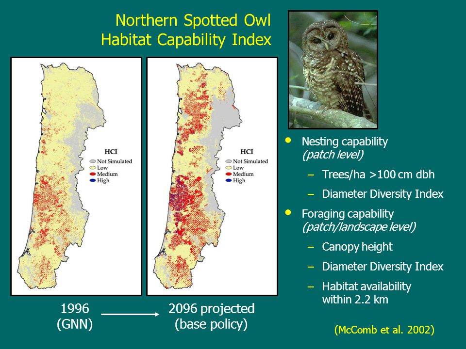 Northern Spotted Owl Habitat Capability Index Nesting capability (patch level) –Trees/ha >100 cm dbh –Diameter Diversity Index Foraging capability (patch/landscape level) –Canopy height –Diameter Diversity Index –Habitat availability within 2.2 km 1996 (GNN) 2096 projected (base policy) (McComb et al.