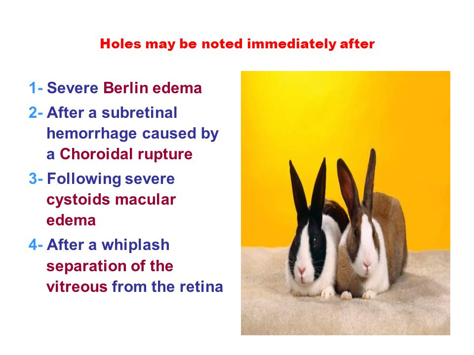Holes may be noted immediately after 1- Severe Berlin edema 2- After a subretinal hemorrhage caused by a Choroidal rupture 3- Following severe cystoids macular edema 4- After a whiplash separation of the vitreous from the retina