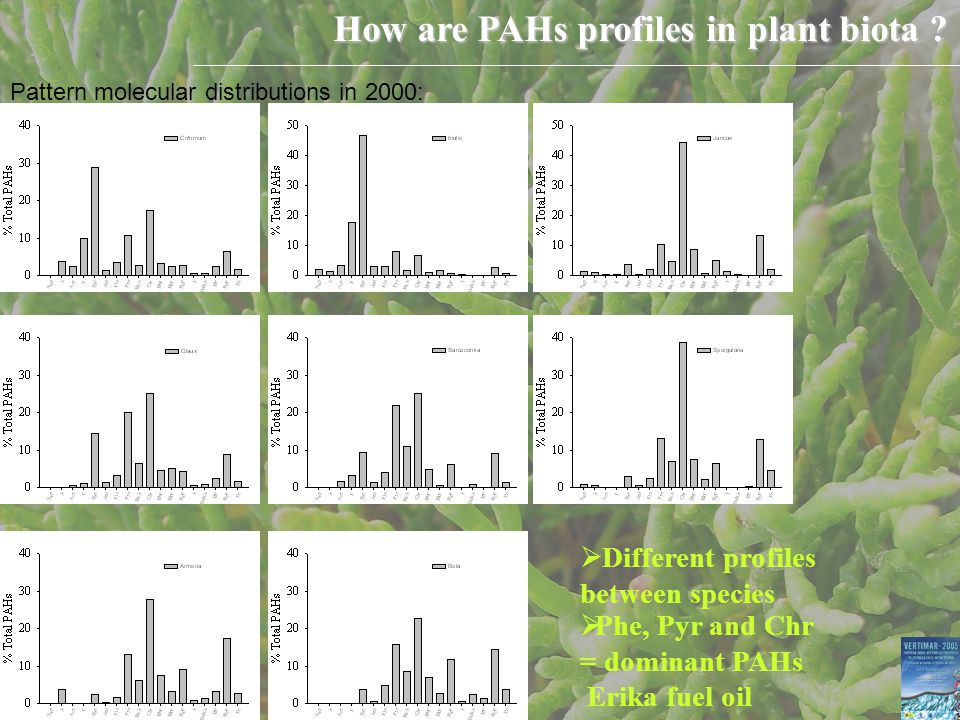 How are PAHs profiles in plant biota .