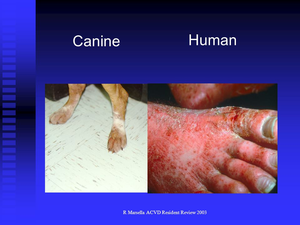 R Marsella ACVD Resident Review 2003 Human Canine