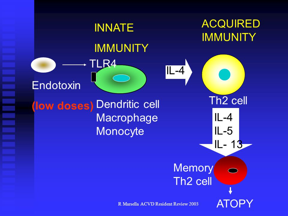 R Marsella ACVD Resident Review 2003 Endotoxin (low doses) INNATE IMMUNITY Dendritic cell Macrophage Monocyte TLR4 ACQUIRED IMMUNITY IL-4 Th2 cell IL-4 IL-5 IL- 13 Memory Th2 cell ATOPY