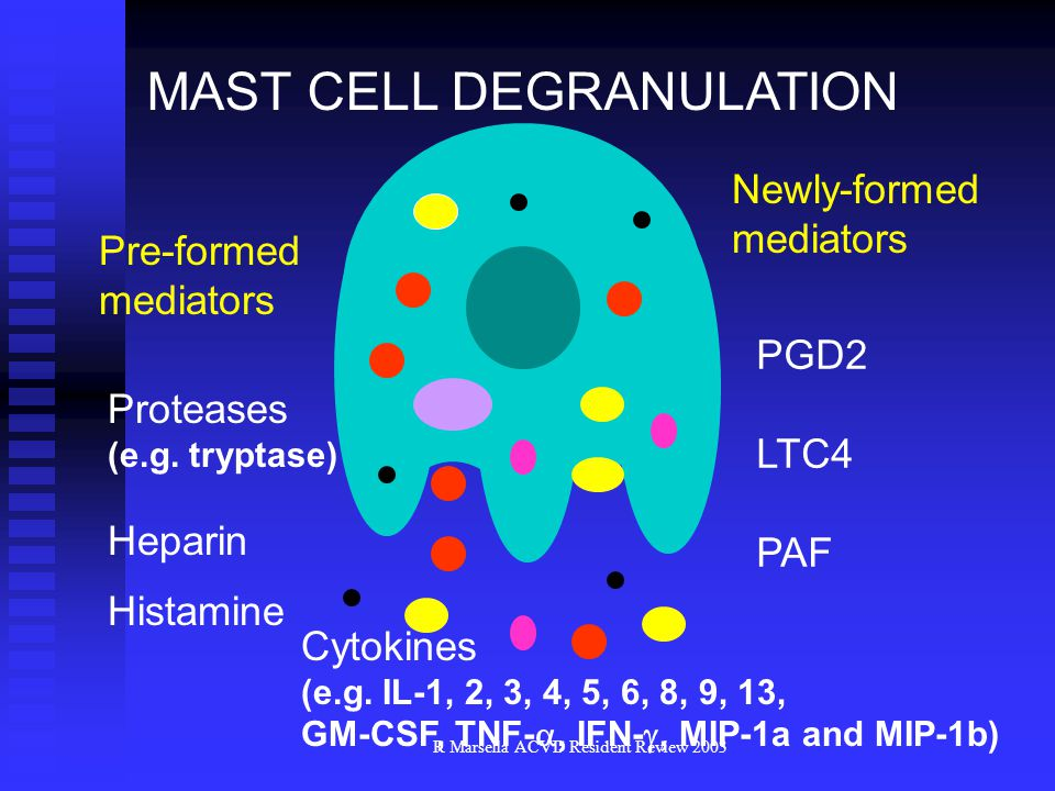 R Marsella ACVD Resident Review 2003 MAST CELL DEGRANULATION Cytokines (e.g.