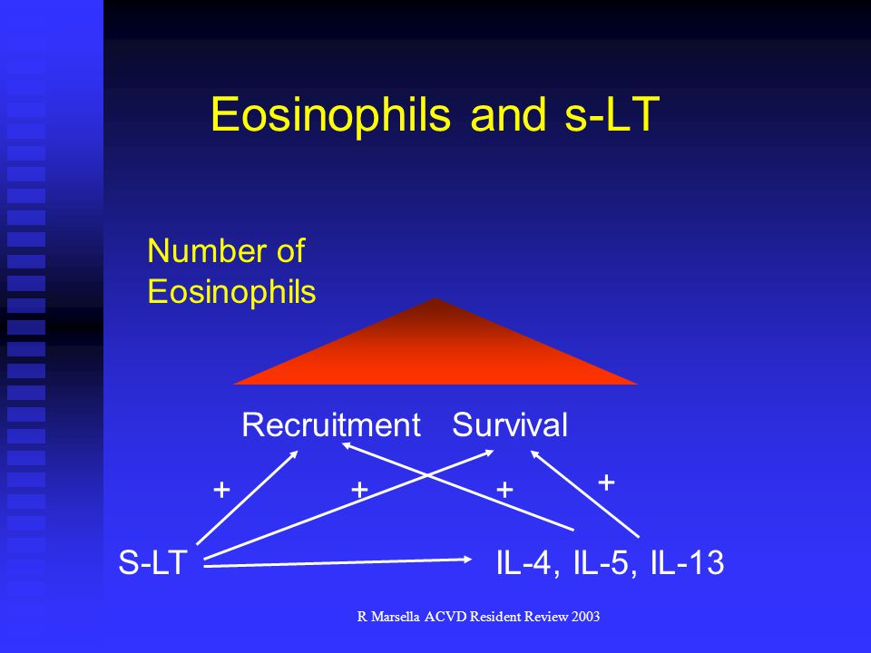 R Marsella ACVD Resident Review 2003 Eosinophils and s-LT Number of Eosinophils RecruitmentSurvival S-LT ++ IL-4, IL-5, IL-13 + +