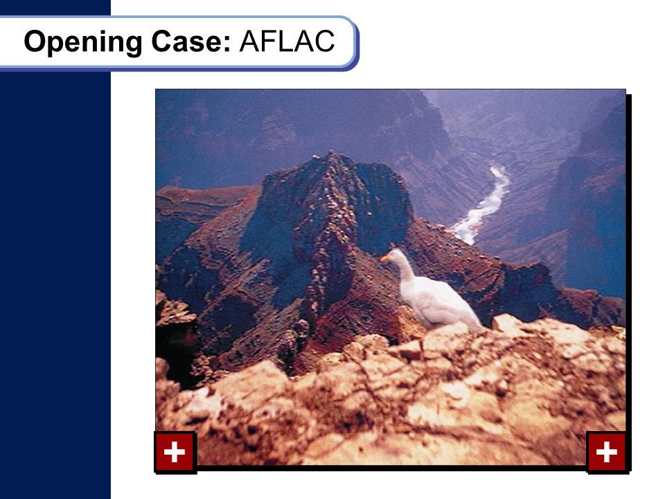 Opening Case: AFLAC + + + +