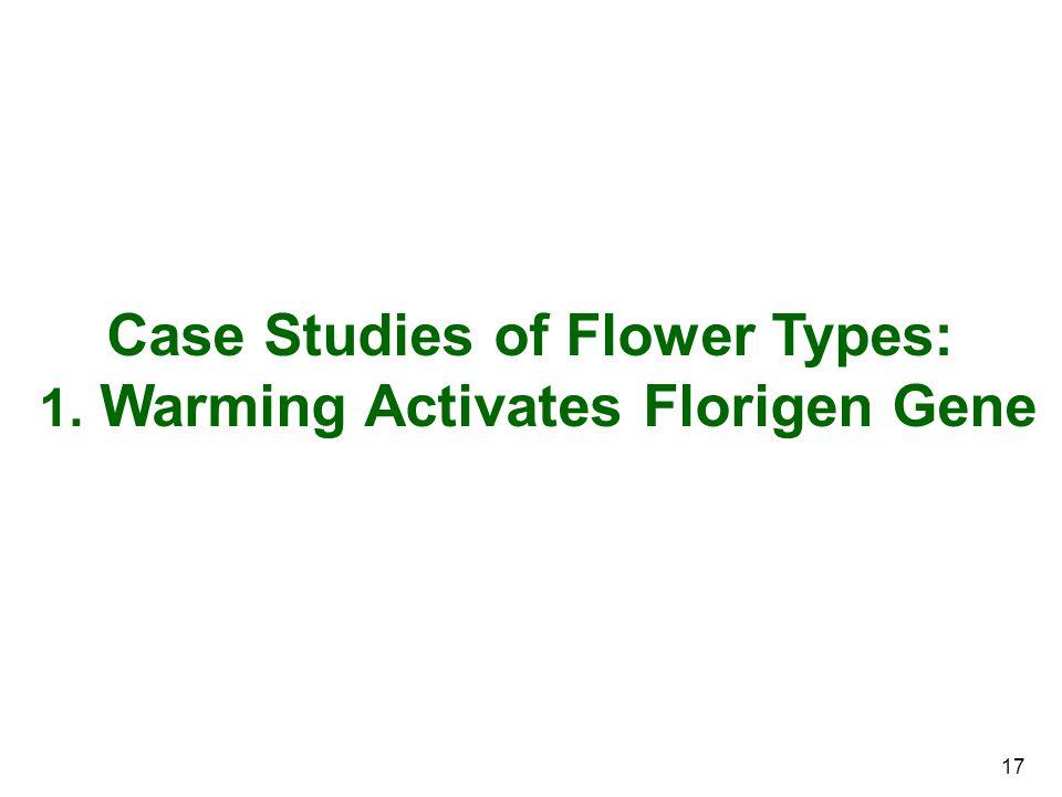 17 Case Studies of Flower Types: 1. Warming Activates Florigen Gene