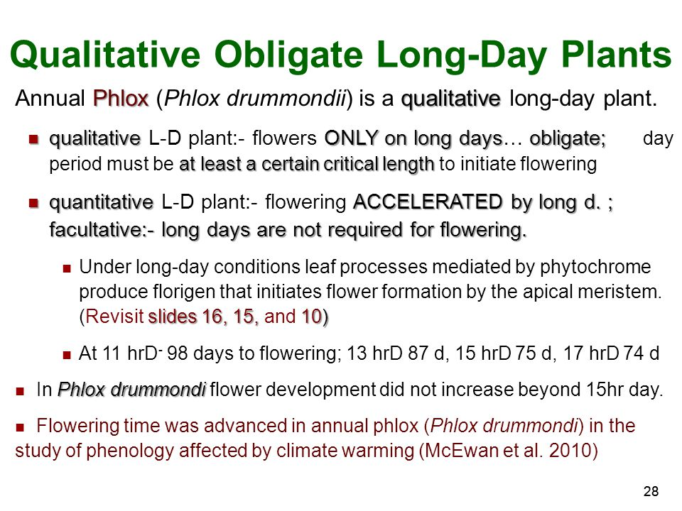 28 Qualitative Obligate Long-Day Plants 28 Phloxqualitative Annual Phlox (Phlox drummondii) is a qualitative long-day plant.