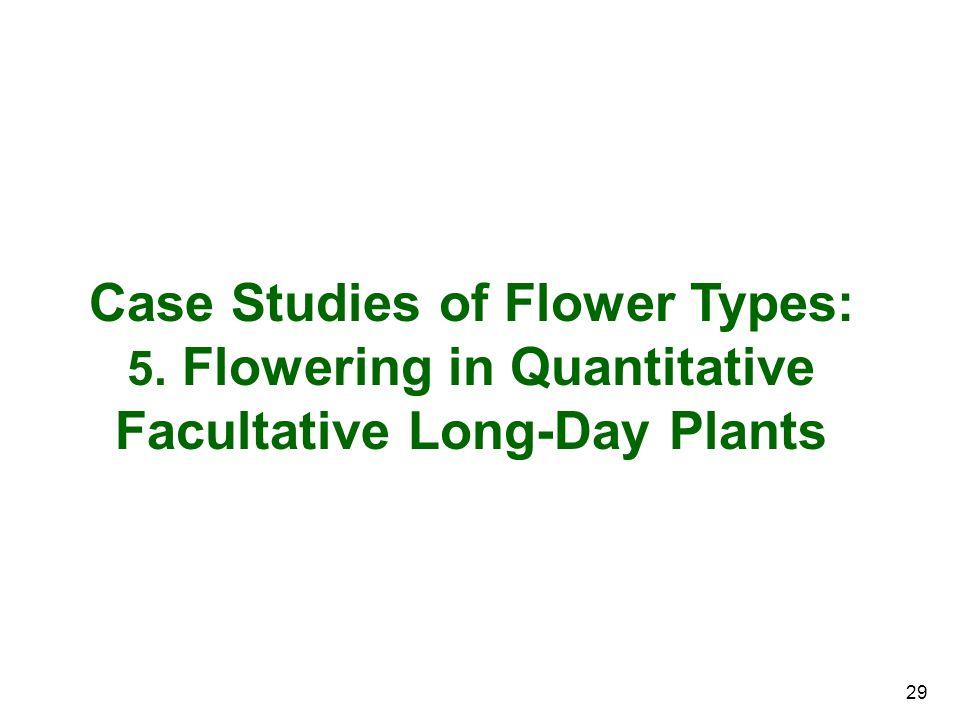 29 Case Studies of Flower Types: 5. Flowering in Quantitative Facultative Long-Day Plants