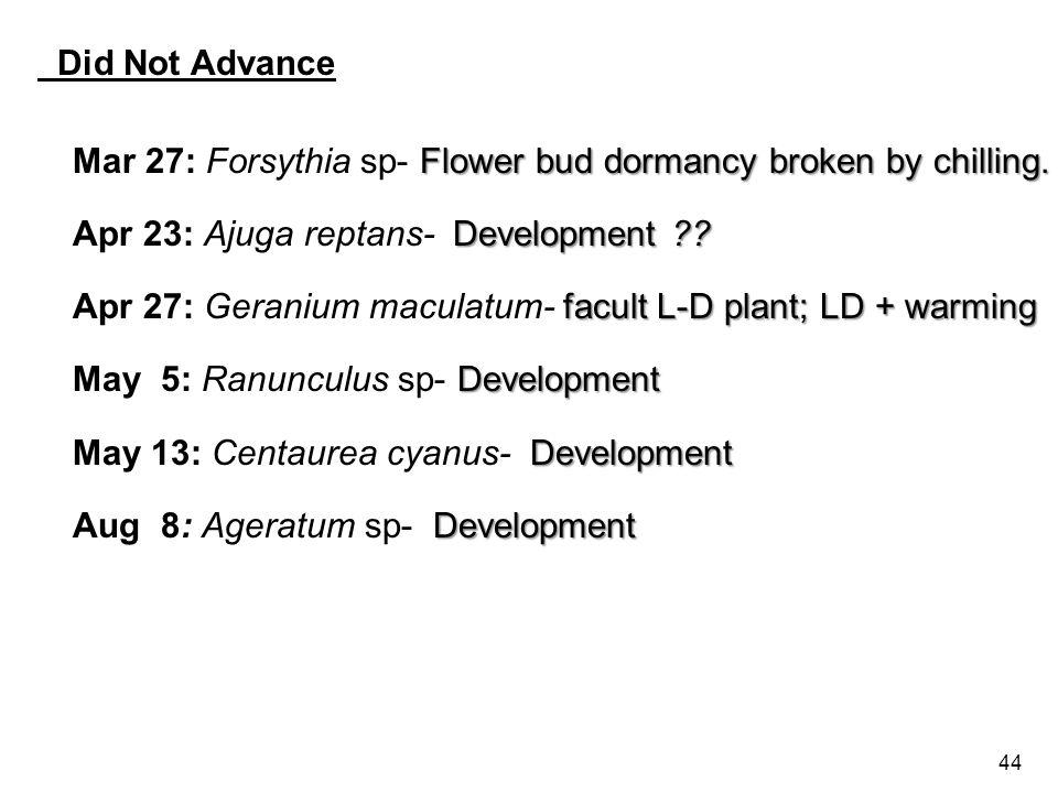 44 Did Not Advance Flower bud dormancy broken by chilling.