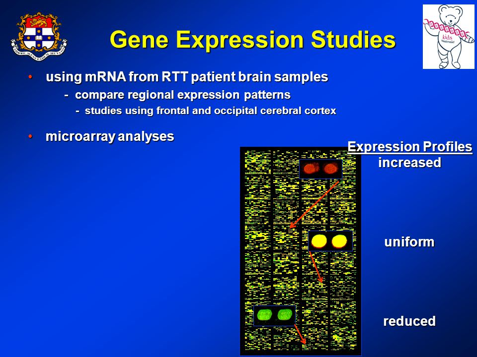 Gene Expression Studies using mRNA from RTT patient brain samplesusing mRNA from RTT patient brain samples - compare regional expression patterns - compare regional expression patterns - studies using frontal and occipital cerebral cortex microarray analysesmicroarray analyses Expression Profiles increaseduniformreduced