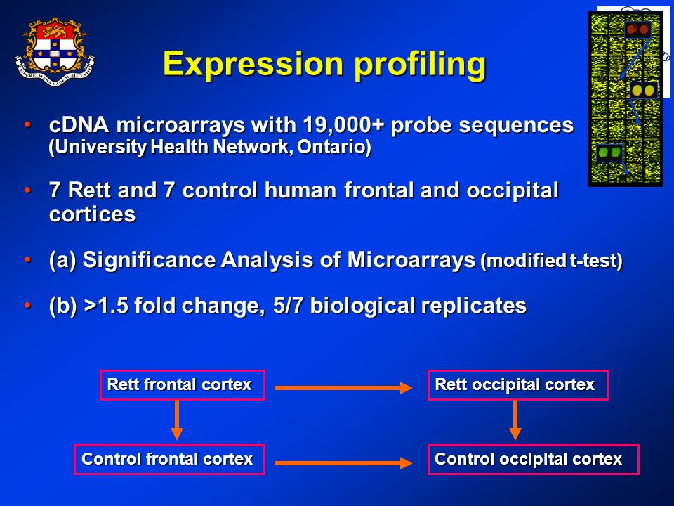 Rett frontal cortex Control occipital cortex Rett occipital cortex Control frontal cortex Expression profiling cDNA microarrays with 19,000+ probe sequences (University Health Network, Ontario)cDNA microarrays with 19,000+ probe sequences (University Health Network, Ontario) 7 Rett and 7 control human frontal and occipital cortices7 Rett and 7 control human frontal and occipital cortices (a) Significance Analysis of Microarrays (modified t-test)(a) Significance Analysis of Microarrays (modified t-test) (b) >1.5 fold change, 5/7 biological replicates(b) >1.5 fold change, 5/7 biological replicates