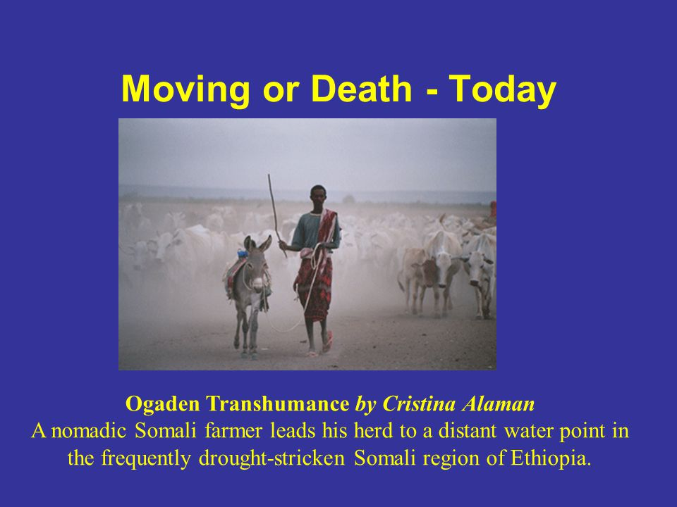 Moving or Death - Today Ogaden Transhumance by Cristina Alaman A nomadic Somali farmer leads his herd to a distant water point in the frequently droug