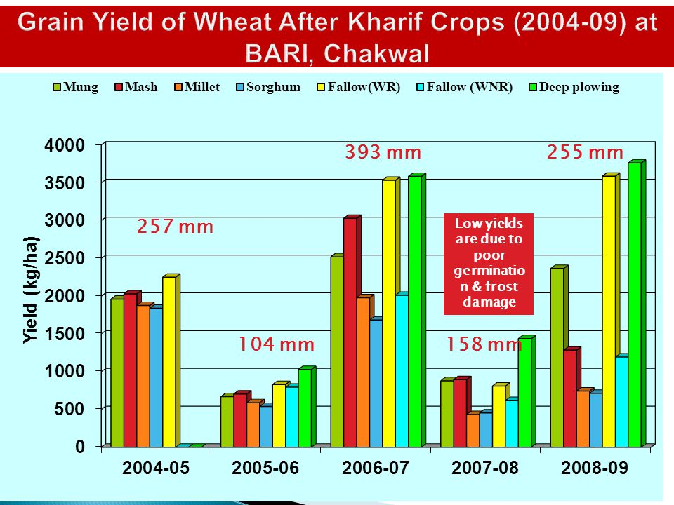 Grain Yield of Wheat After Kharif Crops (2004-09) at BARI, Chakwal 393 mm 257 mm 104 mm158 mm Low yields are due to poor germinatio n & frost damage 2