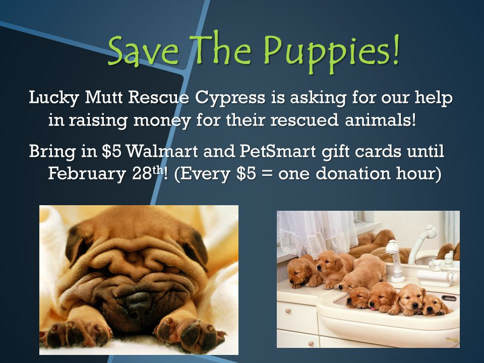 Save The Puppies.