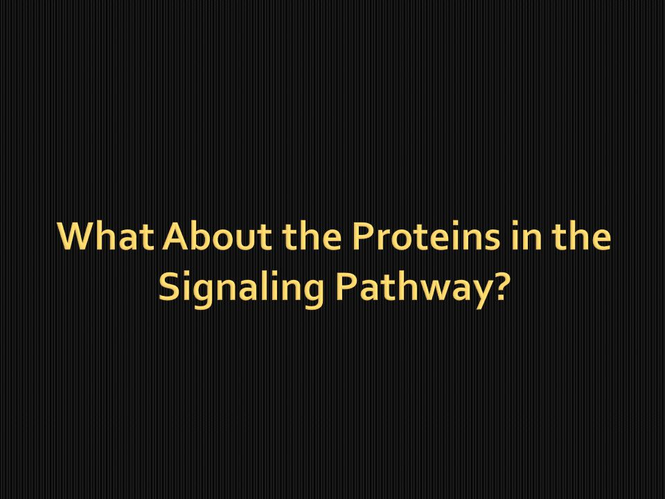 What About the Proteins in the Signaling Pathway