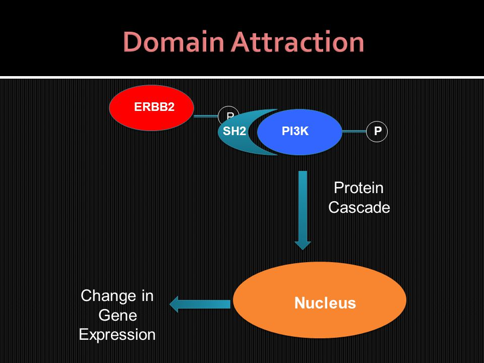 ERBB2 P PI3KSH2 Nucleus P Protein Cascade Change in Gene Expression