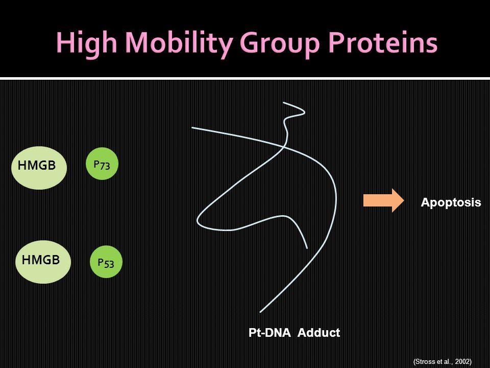 Pt-DNA Adduct Apoptosis HMGB P73P53 (Stross et al., 2002)