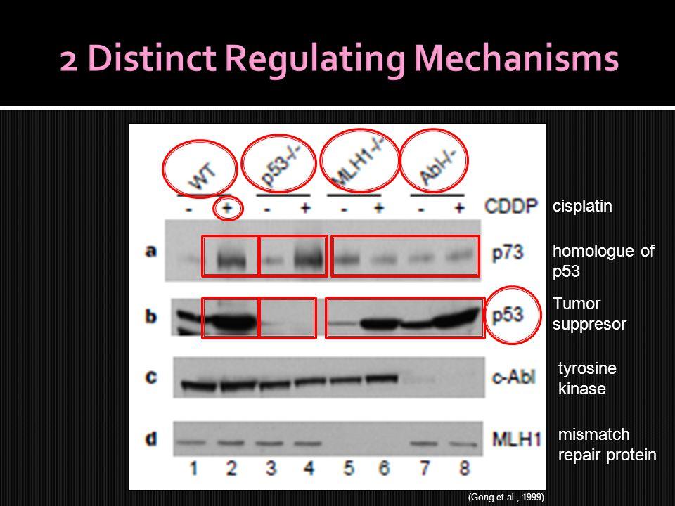 tyrosine kinase mismatch repair protein cisplatin homologue of p53 Tumor suppresor (Gong et al., 1999)