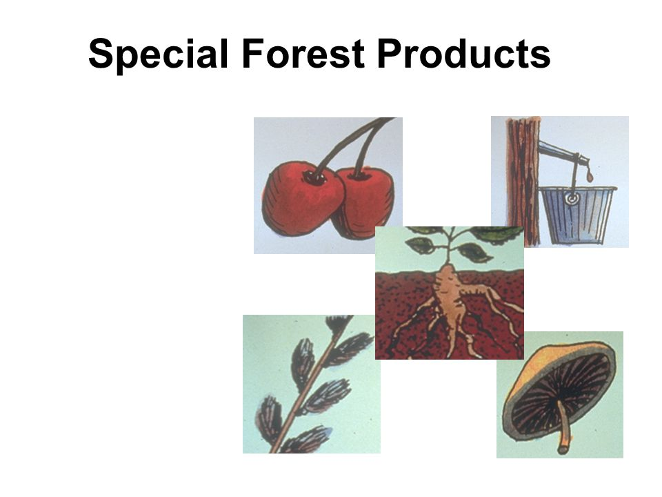 Forest farming involves the cultivation or deliberate management of specialty forest products such as Basketry materials Bee products Botanicals Carving materials Fruits & nuts Fencing materials Medicinals Mushrooms Oils Resins Syrups & saps