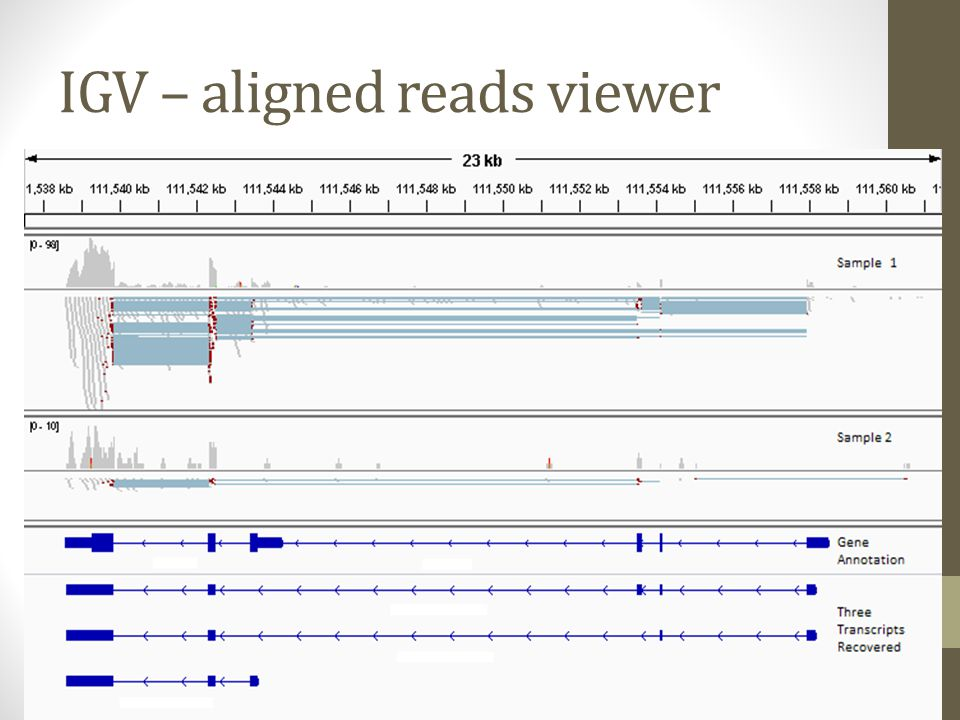 IGV – aligned reads viewer
