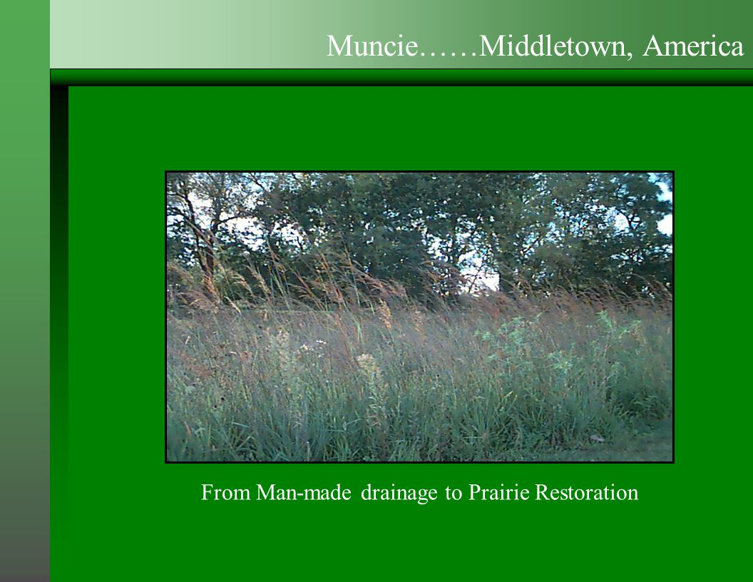 From Man-made drainage to Prairie Restoration Muncie……Middletown, America