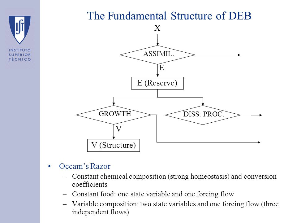 The Fundamental Structure of DEB Occam's Razor –Constant chemical composition (strong homeostasis) and conversion coefficients –Constant food: one state variable and one forcing flow –Variable composition: two state variables and one forcing flow (three independent flows) E (Reserve) V (Structure) X E V ASSIMIL.GROWTHDISS.