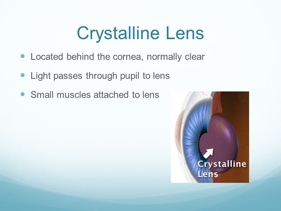 Crystalline Lens Located behind the cornea, normally clear Light passes through pupil to lens Small muscles attached to lens