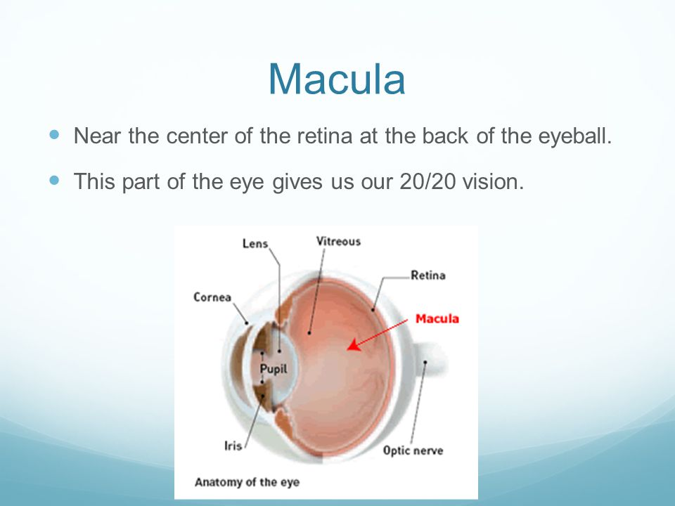 Macula Near the center of the retina at the back of the eyeball. This part of the eye gives us our 20/20 vision.