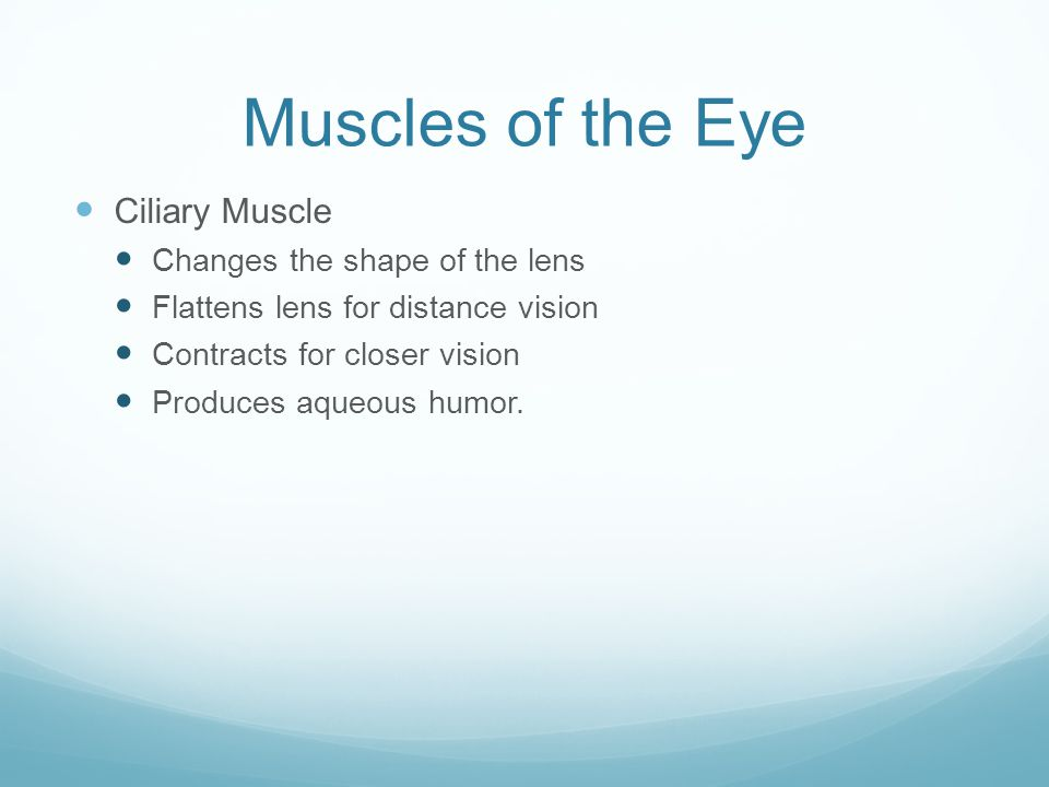 Muscles of the Eye Ciliary Muscle Changes the shape of the lens Flattens lens for distance vision Contracts for closer vision Produces aqueous humor.