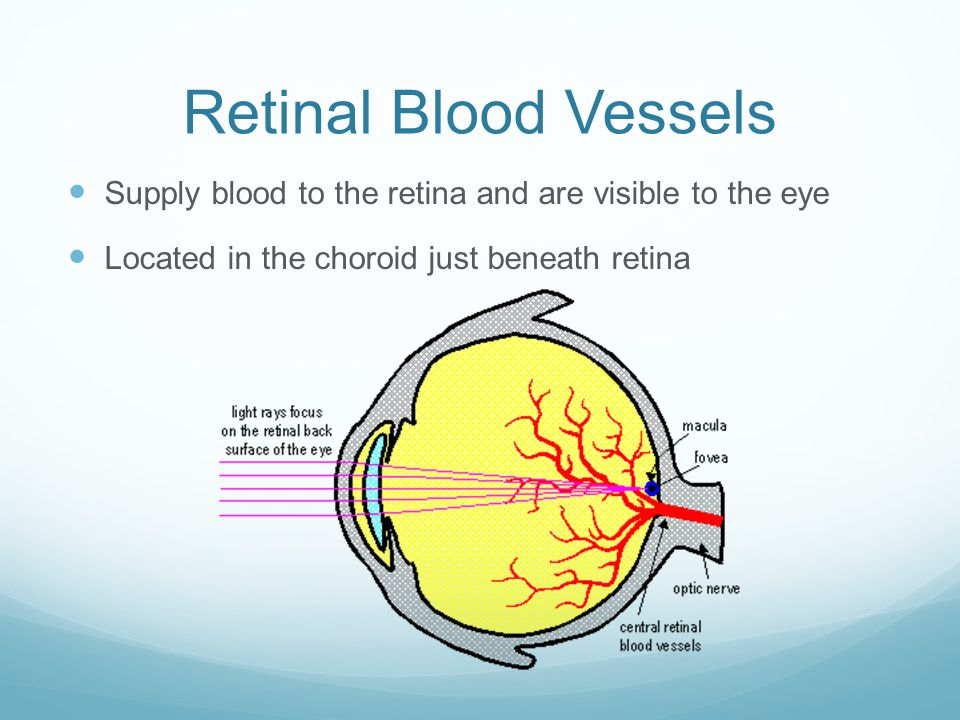 Retinal Pigment Epithelium Layer of cells between the retina and choroid Melanin in the RPE gets rid of waste products