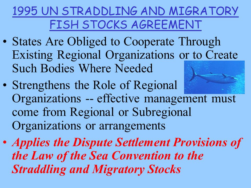 1995 UN STRADDLING AND MIGRATORY FISH STOCKS AGREEMENT States Are Obliged to Cooperate Through Existing Regional Organizations or to Create Such Bodies Where Needed Strengthens the Role of Regional Organizations -- effective management must come from Regional or Subregional Organizations or arrangements Applies the Dispute Settlement Provisions of the Law of the Sea Convention to the Straddling and Migratory Stocks