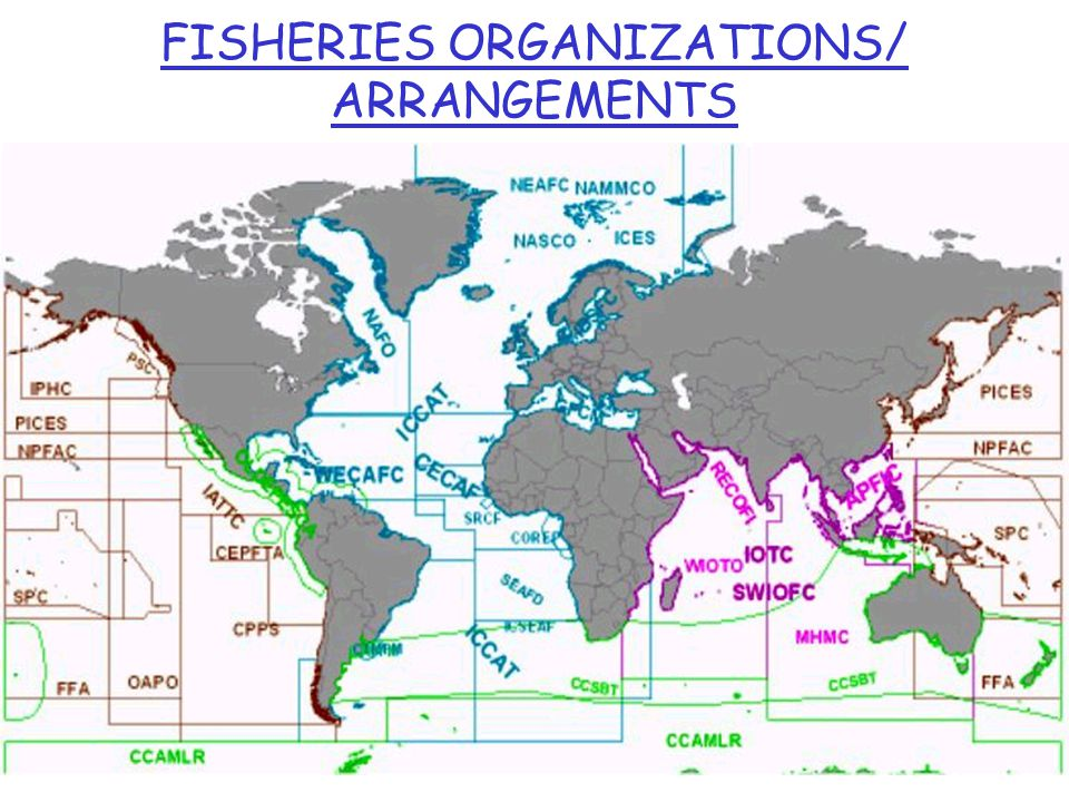 FISHERIES ORGANIZATIONS/ ARRANGEMENTS